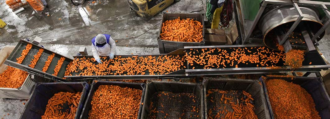 Carrots in packing plant