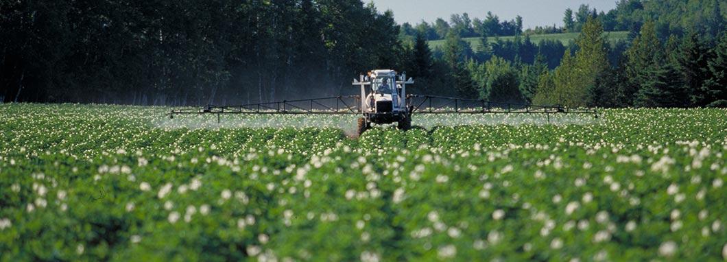 Un tracteur pulvérise des cultures dans un champ