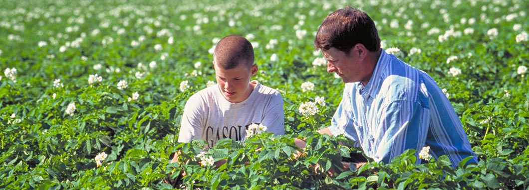 father and son inspect a crop
