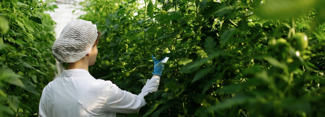 Une scientifique inspecte des plantes