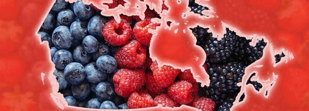 Fruits derrière une carte du Canada