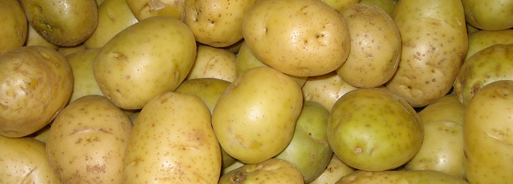 """Potatoes. Photo by Flickr user """"zeldamastertimmy"""" / CC BY 2.0"""