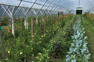 Greenhouse at Rideau Pines Farm. Photo: J. Paillat (CHC)