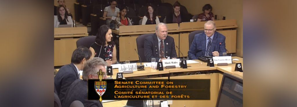 chc at senate hearing