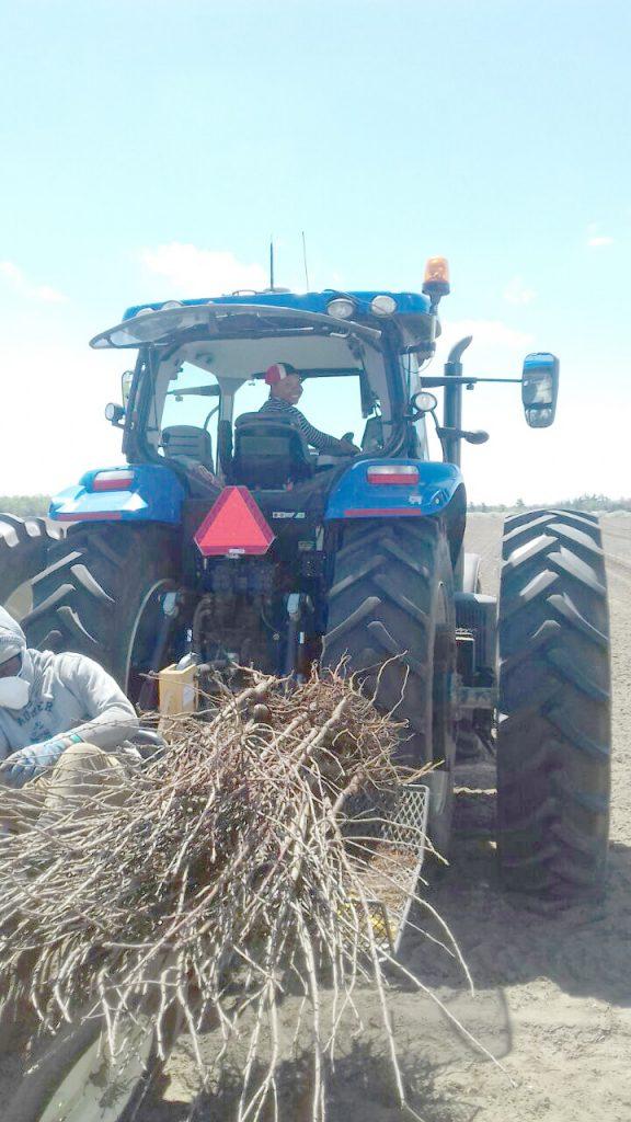 IMG-20180801-WA0005 felena on blue tractor