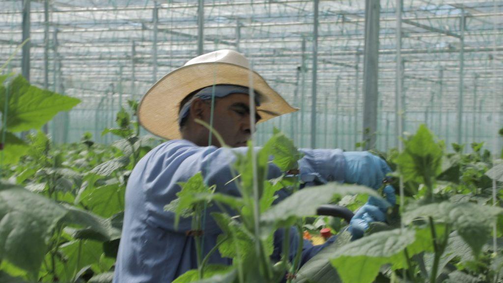 CDN Horticulture JPI Acres_B-ROLL.00_01_54_24.Still004