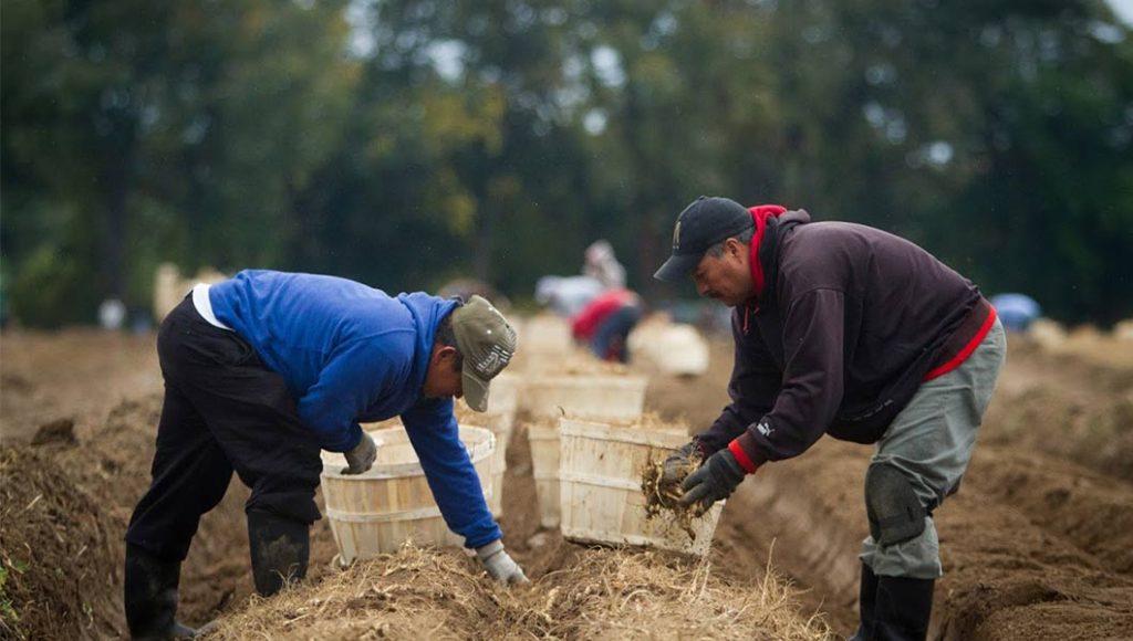 men in field